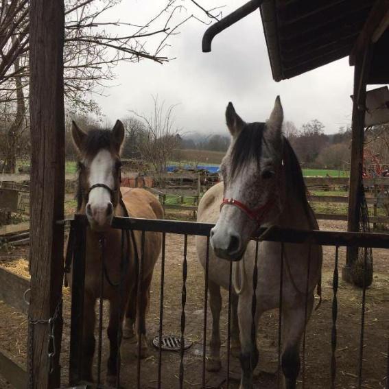 Dringend! Stellplatz für zwei Pferde