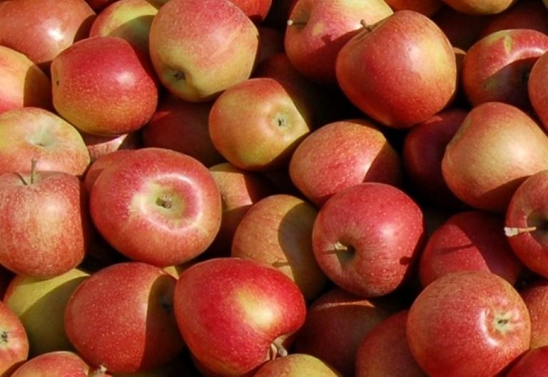 Äpfel zum Selbstpflücken Kürbi