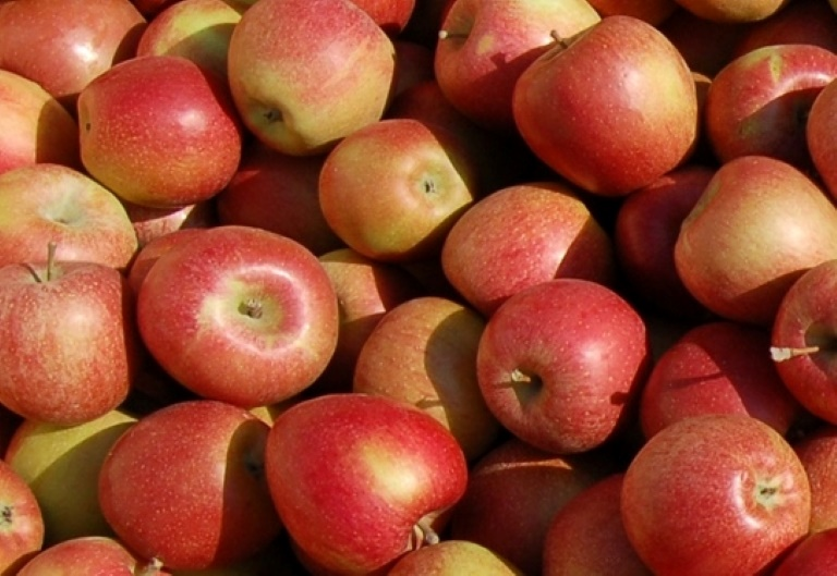 Äpfel Birnen und Zwetschgen